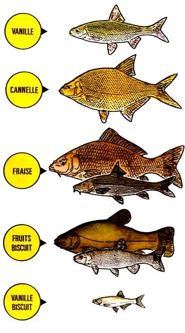 кориандр в прикормке для рыбы